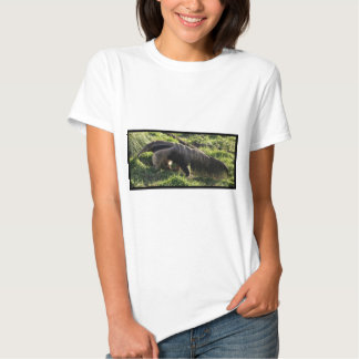 Giant Anteater Ladies Fitted T-Shirt