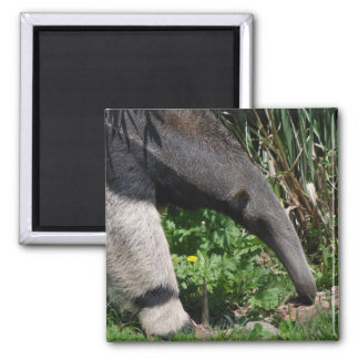 Giant Anteater Photo Magnet