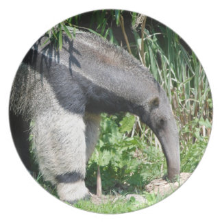 Giant Anteater Plate