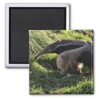Giant Anteater Square Magnet Refrigerator Magnet