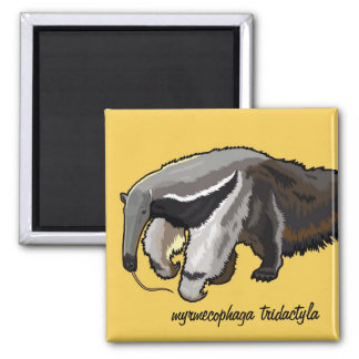 giant anteater square magnet