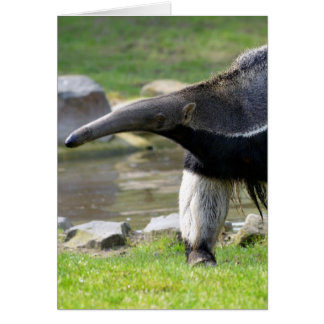 Giant Anteater walking on grass Card
