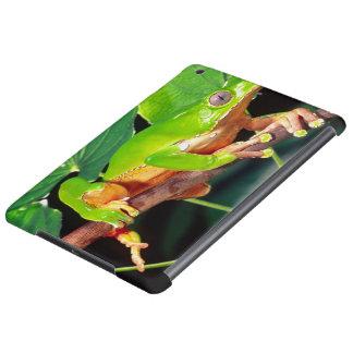 Giant Bicolor Monkey Treefrog, Phyllomedusa