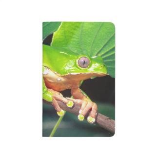 Giant Bicolor Monkey Treefrog, Phyllomedusa Journal