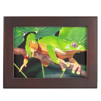 Giant Bicolor Monkey Treefrog, Phyllomedusa Keepsake Box