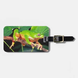 Giant Bicolor Monkey Treefrog, Phyllomedusa Luggage Tag