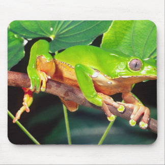 Giant Bicolor Monkey Treefrog, Phyllomedusa Mouse Mat