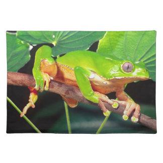 Giant Bicolor Monkey Treefrog, Phyllomedusa Placemat