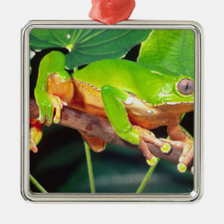 Giant Bicolor Monkey Treefrog, Phyllomedusa Silver-Colored Square Decoration