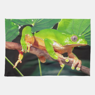 Giant Bicolor Monkey Treefrog, Phyllomedusa Tea Towel