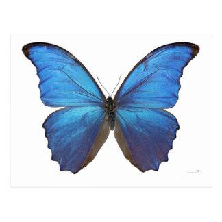 Giant Blue Morpho Butterfly Postcard