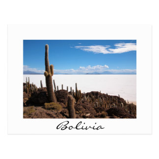Giant cactus at the Salar de Uyuni border postcard