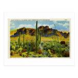 Giant Cactus in Desert Vintage Postcard Landscape Postcard