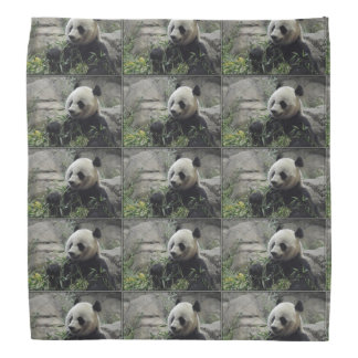 Giant Chinese Panda Bear Bandanna