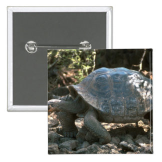 Giant Dome-Shaped Tortoise Walking Button