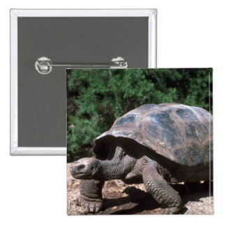 Giant Dome-Shaped Tortoise Walking Pinback Button