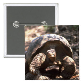 Giant Dome-Shaped Tortoise Walking Pinback Buttons