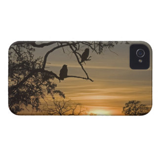 Giant Eagle Owls (Bubo lacteus) silhouetted at iPhone 4 Case-Mate Case