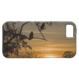 Giant Eagle Owls (Bubo lacteus) silhouetted at iPhone 5 Covers