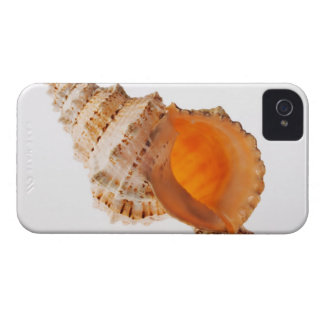 Giant Frog shell (Tutufa bubo) against white iPhone 4 Covers
