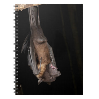 Giant Fruit Bat, Pteropus giganteus, from India Notebook