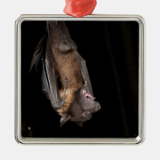 Giant Fruit Bat, Pteropus giganteus, from India Silver-Colored Square Decoration