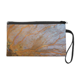 Giant gorgonian sea fan (Plexauridae sp.) Wristlet Clutch