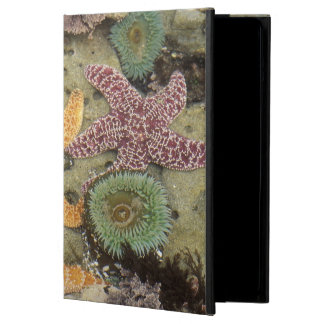 Giant green anemones and ochre sea stars iPad air covers