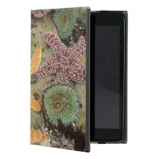 Giant green anemones and ochre sea stars iPad mini cases