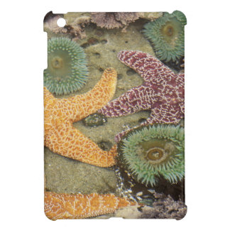 Giant green anemones and ochre sea stars iPad mini cover