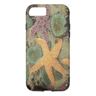 Giant green anemones and ochre sea stars iPhone 8/7 case