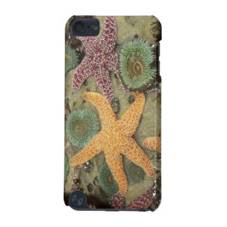 Giant green anemones and ochre sea stars iPod touch (5th generation) cover