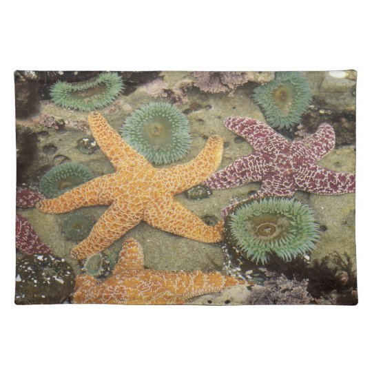 Giant green anemones and ochre sea stars placemat