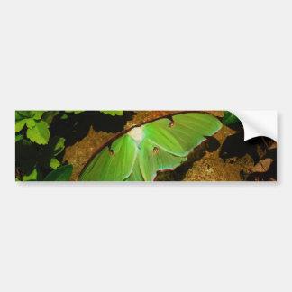 Giant Green Luna moth Car Bumper Sticker