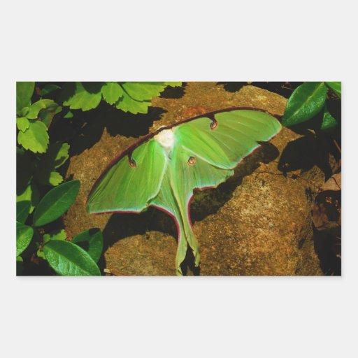 Giant Green Luna moth Rectangle Sticker