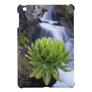 Giant Groundsel Or Dendrosenecio 2 Cover For The iPad Mini