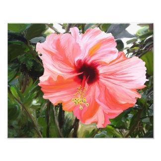 Giant Hibiscus Photograph