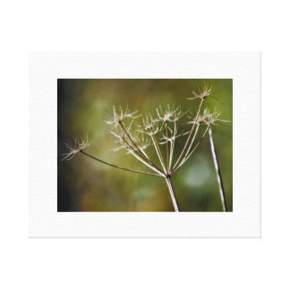 Giant Hogweed Stretched Canvas Prints