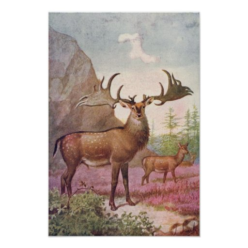 Giant Irish Deer Prehistoric Animals Antique Print