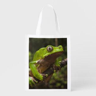Giant leaf frog Phyllomedusa bicolor)