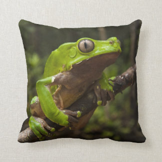 Giant leaf frog Phyllomedusa bicolor) Cushion
