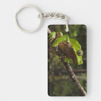 Giant leaf frog Phyllomedusa bicolor) Double-Sided Rectangular Acrylic Key Ring