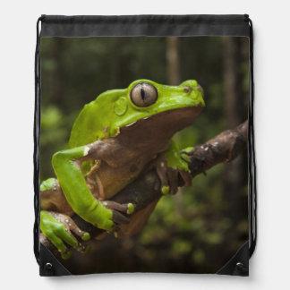 Giant leaf frog Phyllomedusa bicolor) Drawstring Bag