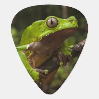 Giant leaf frog Phyllomedusa bicolor) Guitar Pick