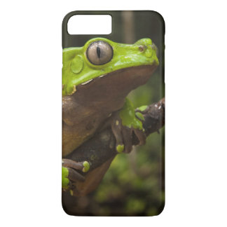 Giant leaf frog Phyllomedusa bicolor) iPhone 8 Plus/7 Plus Case