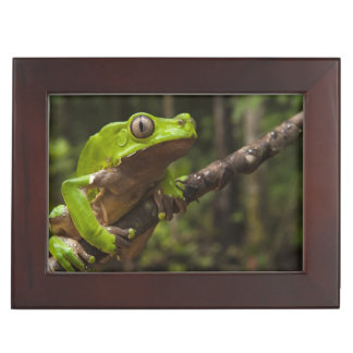 Giant leaf frog Phyllomedusa bicolor) Keepsake Box