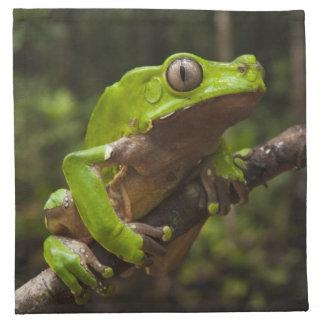 Giant leaf frog Phyllomedusa bicolor) Napkin
