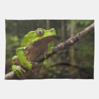 Giant leaf frog Phyllomedusa bicolor) Tea Towel
