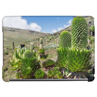 Giant Lobelia (Lobelia Deckenii) In Mount Kenya