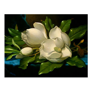 Giant Magnolias on a Blue Velvet Cloth Postcard
